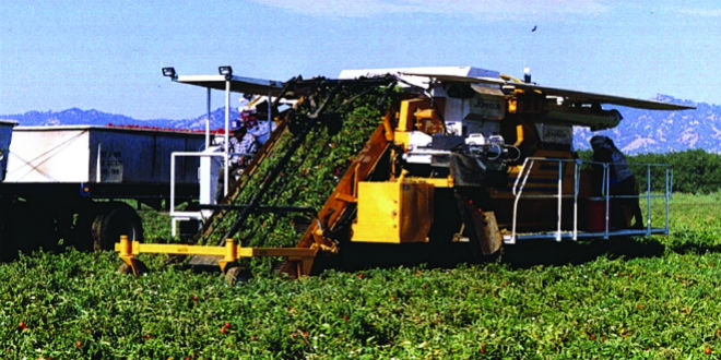 The self-propelled Johnson Tomato Harvester, which is now manufactured and sold by California Tomato Machinery Co. Photo: California Tomato Machinery
