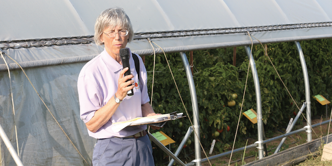 Prune, support greenhouse tomatoes - Vegetable Growers News